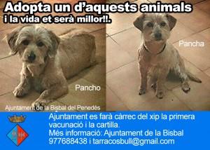 gos_adopta