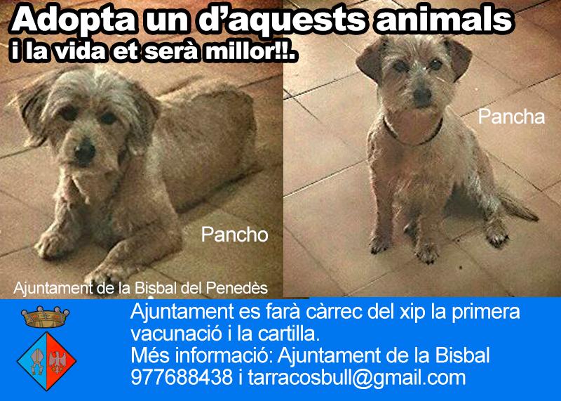 Ajuntament de la bisbal del pened s adopta un animal - Tiempo la bisbal del penedes ...