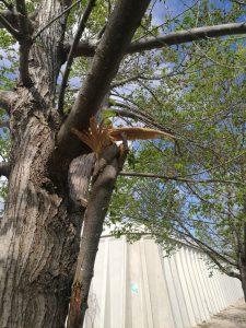 arbres priorat 2