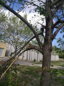 arbres priorat 7