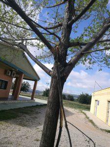 arbres priorat 8