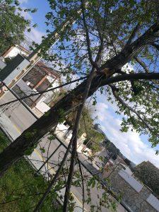 arbres priorat 9