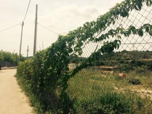 Fotografia del lloc on s'ubicarà l'aparcament d'autobusos