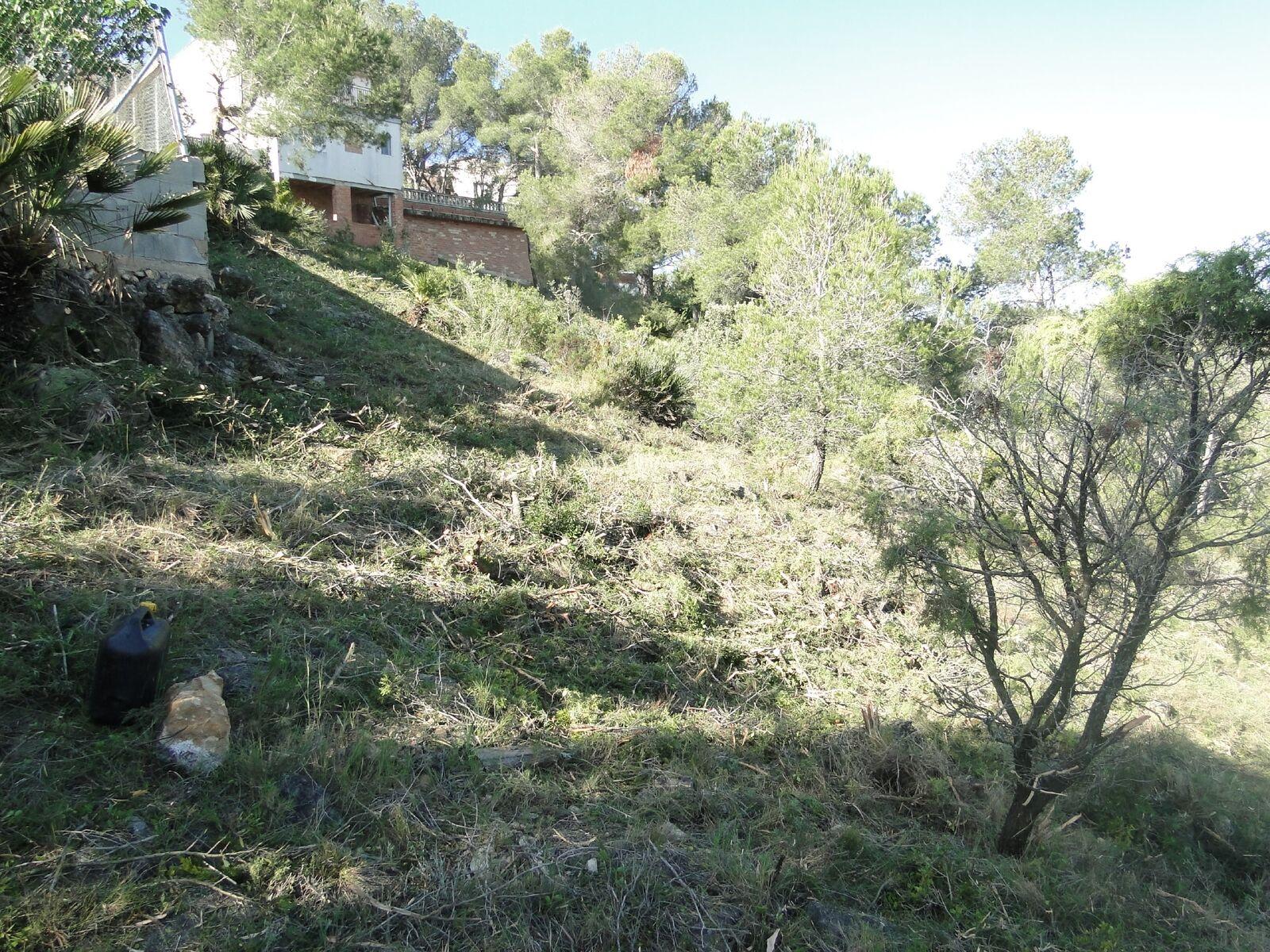 L'Ajuntament crea una franja forestal a Can Gordei