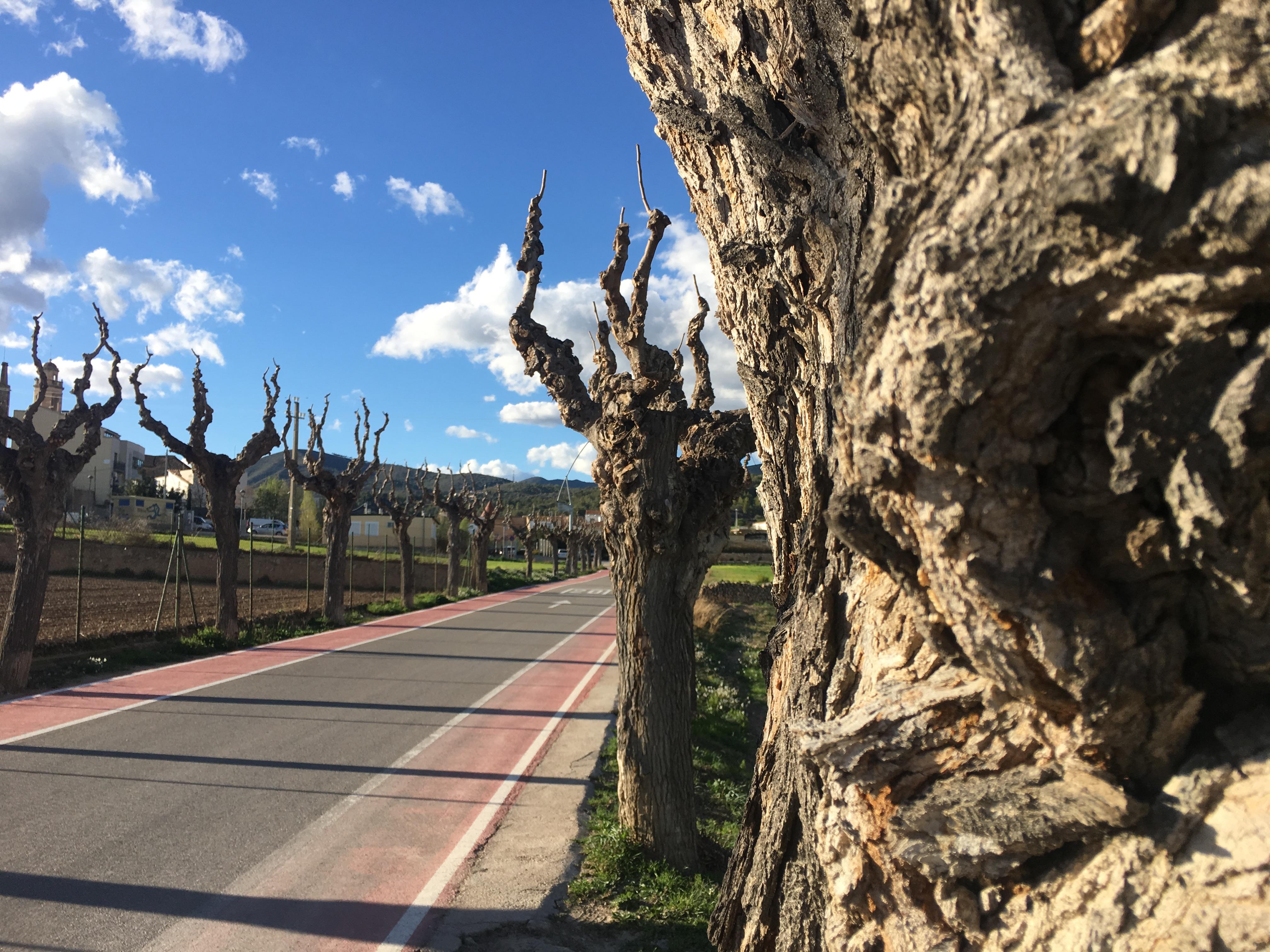 Una infecció per fongs obliga a talar diversos arbres de l'avinguda Baix Penedès