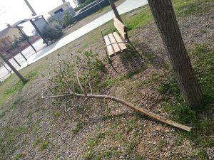 arbres priorat 4