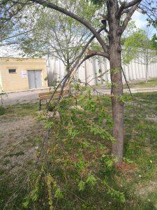 arbres priorat 5