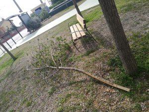 arbres priorat 6