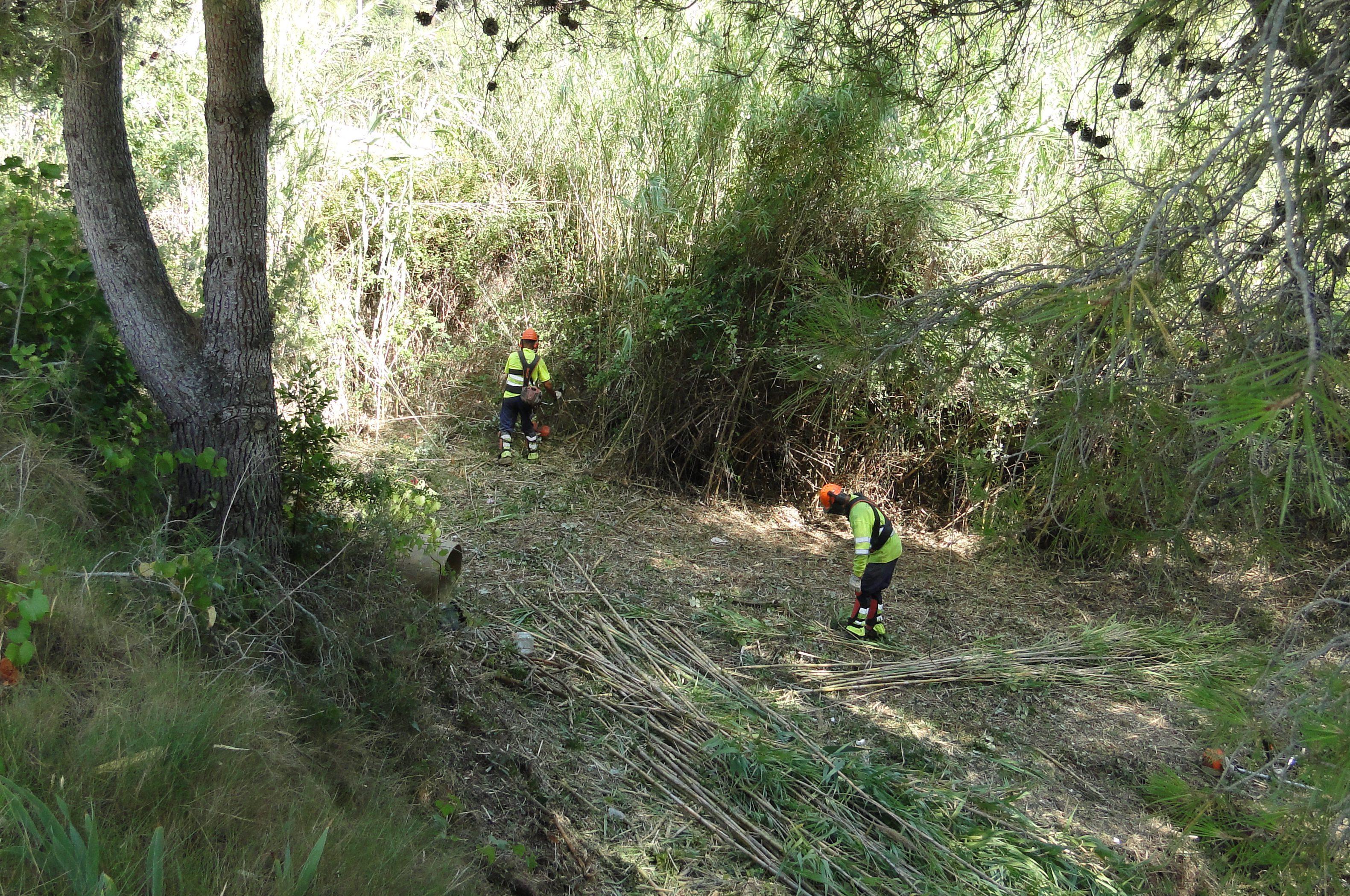 Cinc baixpenedesencs han començat a netejar diverses zones verdes de l'Esplai, Can Gordei i el Priorat en el marc d'un Pla d'ocupació de la Diputació de Tarragona