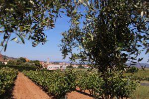 poble vinyes i oliveres